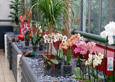 Gartenbaubetrieb Dirk Rackelmann Orchideen